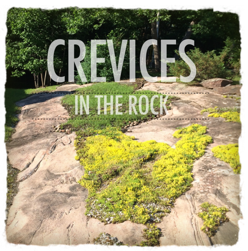 Rock Crevices 2
